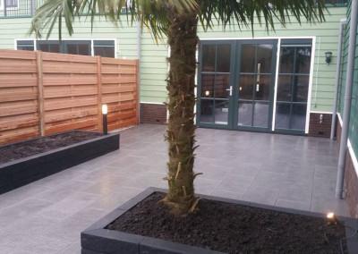 Strakke tuin te Zaandam met Palmboom